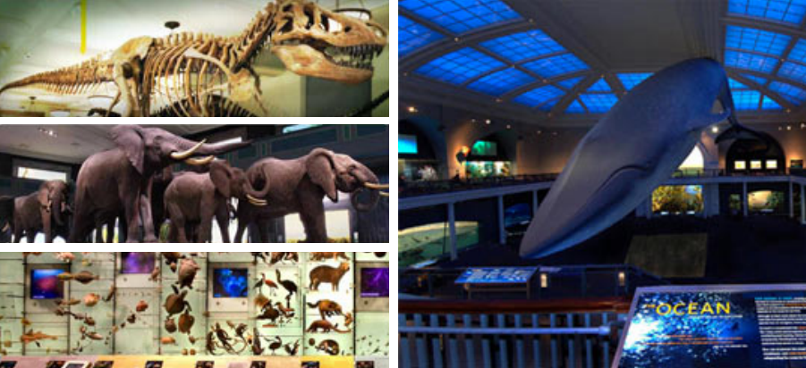 Museum Of Natural Science Discounts