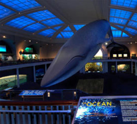 American Museum Of Natural History Nyc Discount Tickets