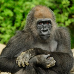 Bronx Zoo Group Discounts Total Experience