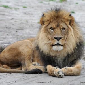 Group discounts Bronx Zoo